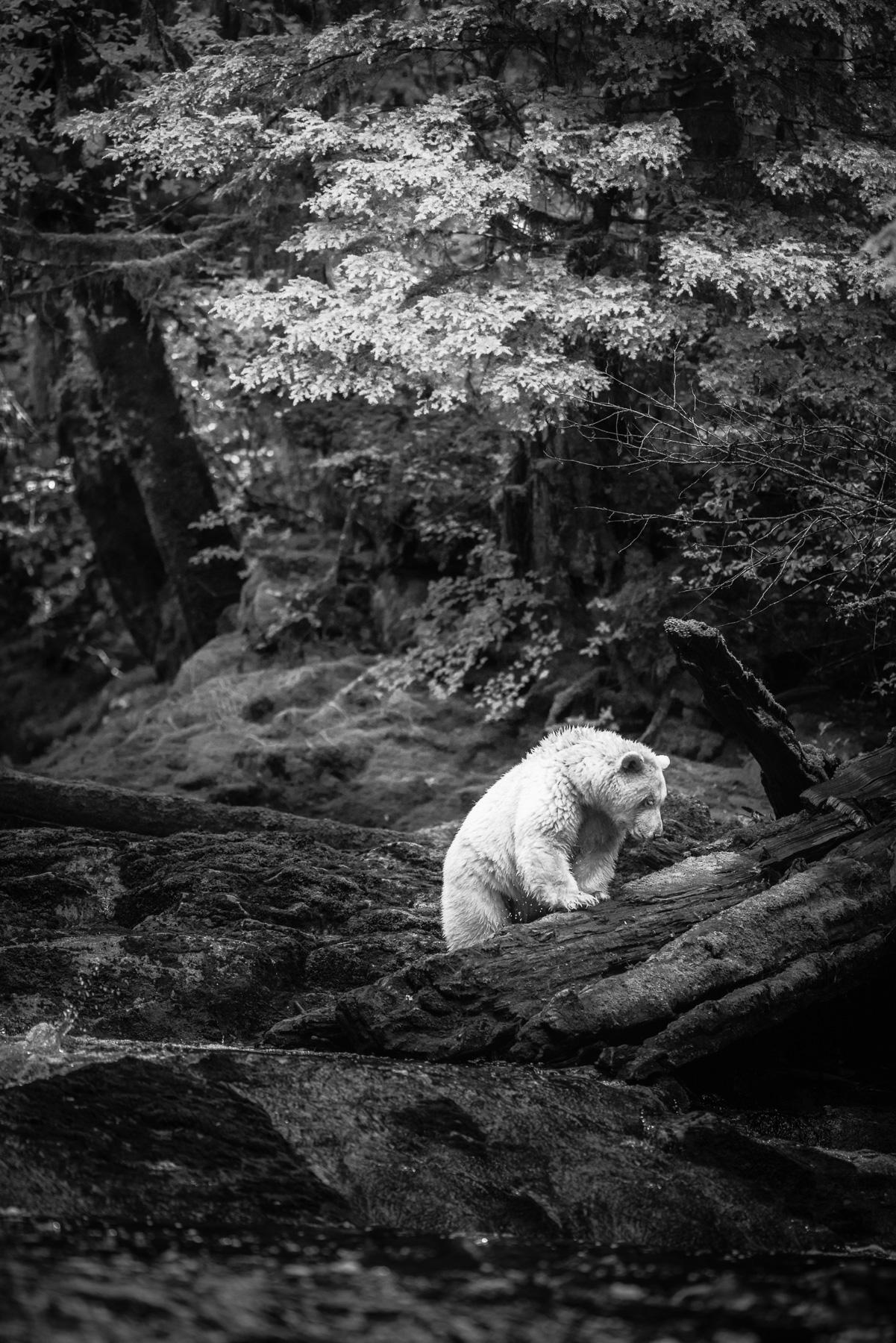 GreatBearRainforest-DavidduChemin
